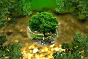 direito ambiental florestas